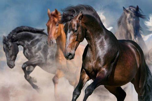 090367 Cavalli al galoppo sull'acqua