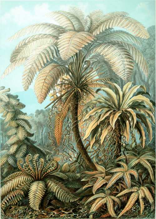 Haeckel Ernst - Filicinae