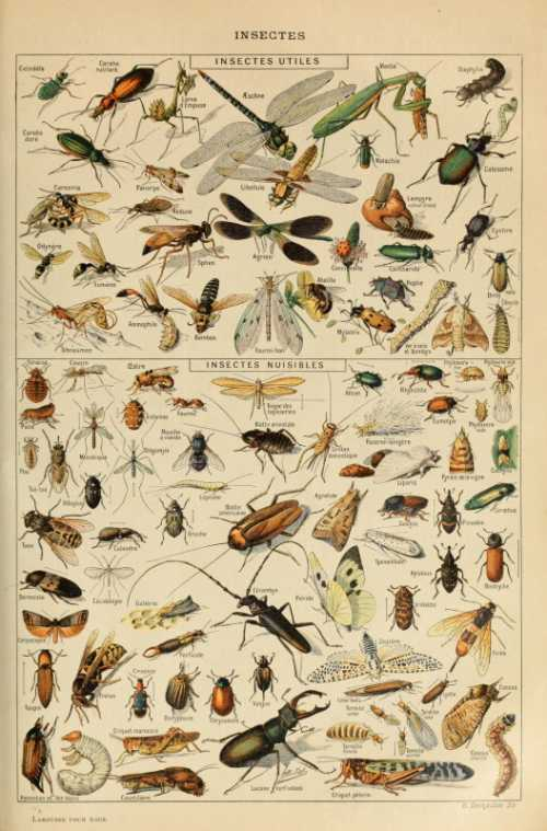 Adolphe Millot - Insectes