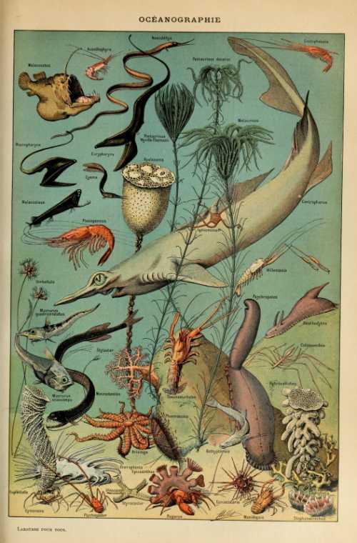 Adolphe Millot - Oceanographie pour tous