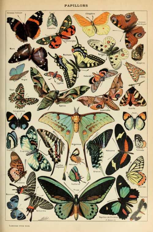 Adolphe Millot - Papillons pour tous I