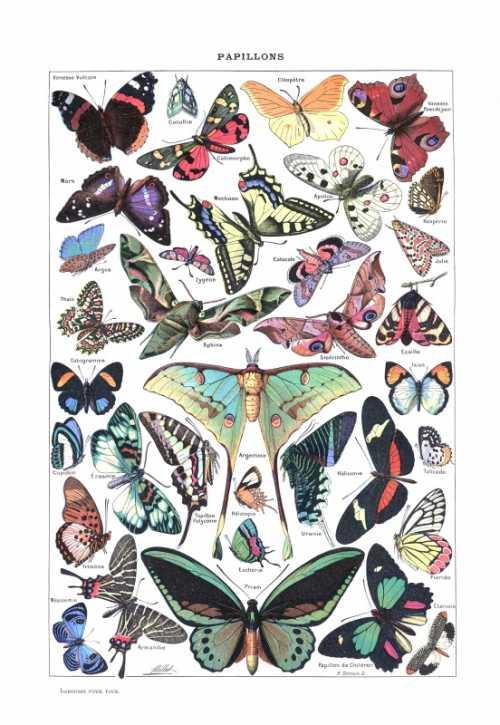 Adolphe Millot - Papillons pour tous II