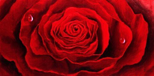 Gianola Bernardino - Rosa scarlatta