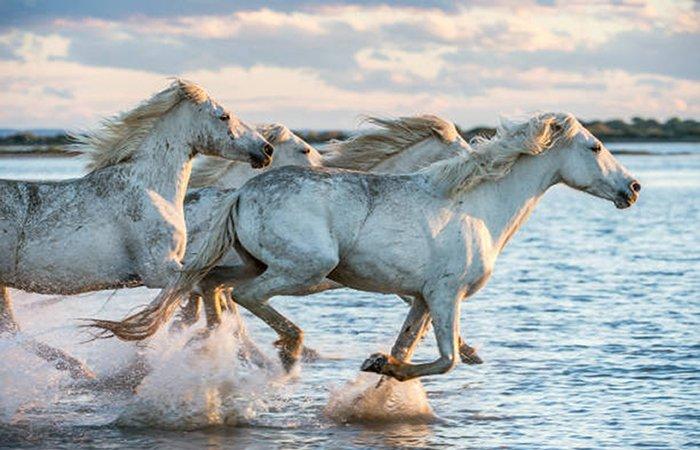 090365 Cavalli in riva al mare